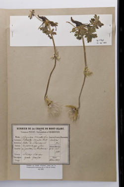 Herbier Payot